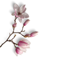 kwiat5